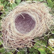 try this nest picture